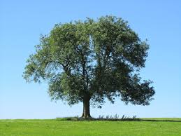 ash tree let me twine mine arms about that where against my
