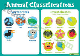 vertebrates and invertebrates animal classification poster