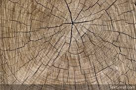 wood tree rings texture free photo textures and backgrounds