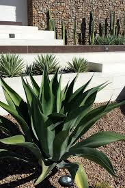 southwestern style home decor eco friendly front yard landscaping sage design studios hgtv