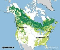map of american map of the last ancient forests of america greenpeace