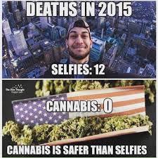 Legalize Weed Meme - top 10 weed memes of 2015 high times maryjane pinterest