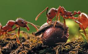 ants aren u0027t enemy fine gardening
