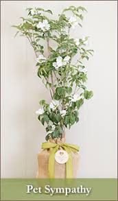 sympathy gift gift trees memorial tree gifts seeds of
