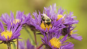 native nebraska plants 5 simple tips to turn your yard into pollinator paradise u2013 cool