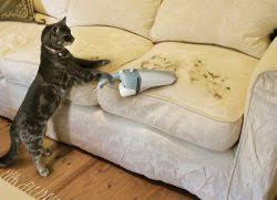 se débarrasser d un canapé comment enlever l odeur de l urine de du canapé rowland98 com