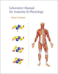 Human Anatomy And Physiology Lab Manual Marieb Laboratory Manual For Anatomy U0026 Physiology 6th Edition Anatomy