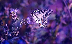Butterfly Flower Butterfly On The Flower Wallpaper Download Wallpaper Nature Free
