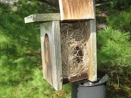 hummingbird nesting box images reverse search