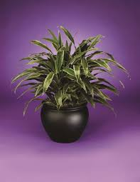 office plant find the right office plant with our plant brochure phillip u0027s