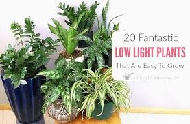 best plants for low light bathroom plants low light awesome best plants that thrive in your