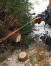 find christmas trees in forest grove pnw christmas tree farms u0026 lots