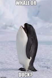 Meme Penguin - whale penguin imgflip