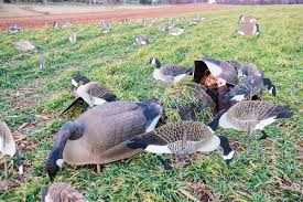 Goose Hunting Layout Blinds Silhouette Strategies Why 2 D Decoys Dominate Wildfowl