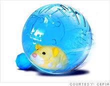 zhu zhu pets hottest toy holiday season nov 23 2009