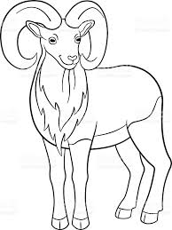 coloring pages cute beautiful urial with great horns stock vector
