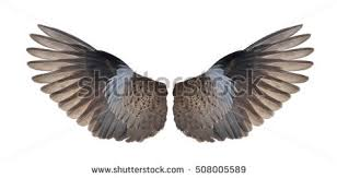 Bird Wing - bird wings stock images royalty free images vectors