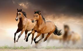 mustang horse running 24 02 17 brown horse running wallpapers30 wall paper