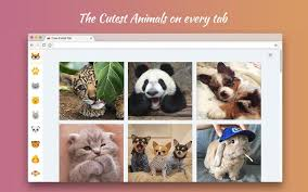 theme google chrome rabbit cute animal tab wallpaper hd new tab themes chrome web store