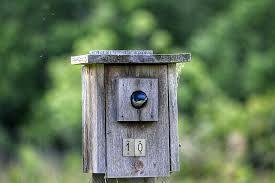 best dimensions for bird house entrance holes