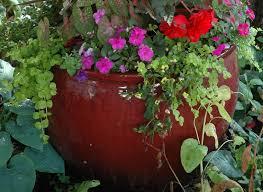 earth tones native plant nursery welcome to platt hill nursery garden center