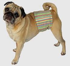 belly bands dog diapers belly bands dog wraps and puppy belly bands