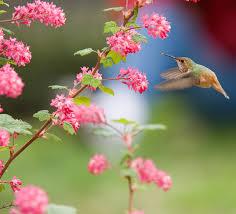 Flower And Bird - file bird and flowers jpg wikimedia commons