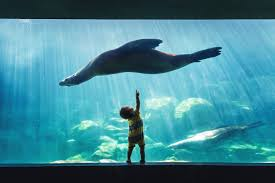 child and sea lion image national geographic your shot photo of
