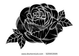 black roses black roses stock images royalty free images vectors