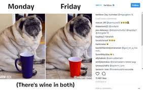 Dog Owner Meme - memes in marketing website success