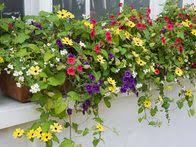 Flower Boxes That Thrive In by 1138 Best Window Boxes Images On Pinterest Windows Window Boxes
