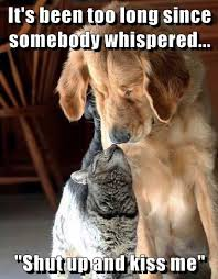 Kiss Me Dog Meme - lolcats shut up lol at funny cat memes funny cat pictures with