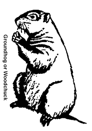 awesome groundhog coloring 57 picture coloring