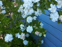how to make a feng shui garden feng shui plants and garden