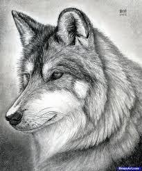 pencil drawings wolves howling at the moon drawing art u0026 skethes
