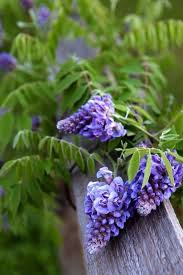 109 best flowers end garden images on pinterest exotic flowers