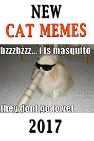 New Cat Meme - memes new cat memes 2017 funny cat memes memes books for free
