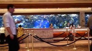 huge aquarium behind front desk at mirage in las vegas