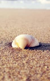 hd sea shell live wallpaper android apps on google play