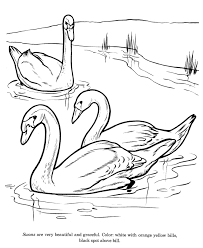 animal drawings coloring pages swan bird identification drawing