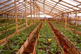 bamboo greenhouse our farm by earth flora inc
