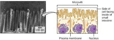 plasma membrane and cytoplasm article khan academy