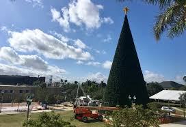 well suited design 100 ft tree in delray chritsmas