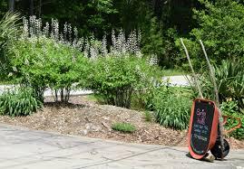 mail order native plants using georgia native plants june 2015