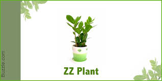 indoor plants that don t need sunlight plants that don t need sun dress up your home with these indoor