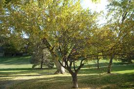 Arboretum by Murray City Park Arboretum