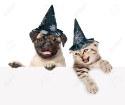 halloween background for pets halloween dog images u0026 stock pictures royalty free halloween dog
