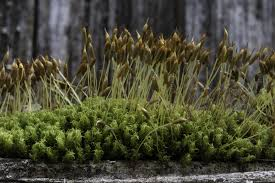 native plants in landscape management living in the land of mosses pacific northwest pest management