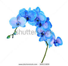 blue orchid flower beautiful blue orchid flower isolated on stock photo 363445244