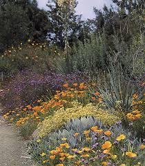 native plants san francisco cnps orange county chapter california native plant society garden
